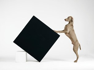 William Wegman. Being Human