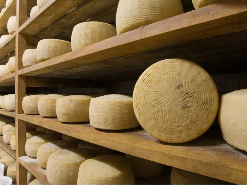 The best Ticino cheese